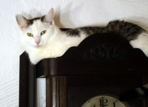 S-Katze_auf_Uhr2