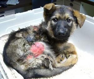 Hauptströmungen des Tiermissbrauchs