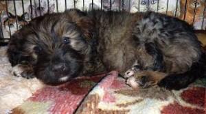 Tamino, vom Findelkind zum Rettungshund
