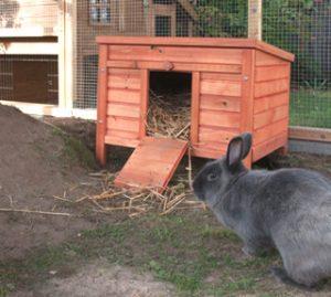 kaninchen-im-neueu-zuhause